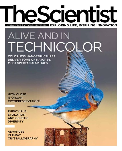 The Scientist February 2013 Cover