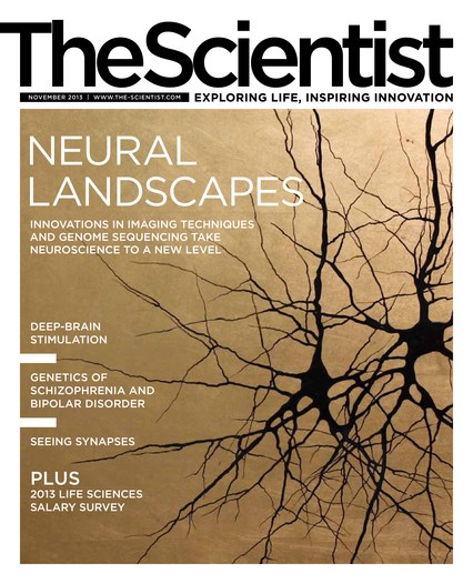 The Scientist November 2013 Cover