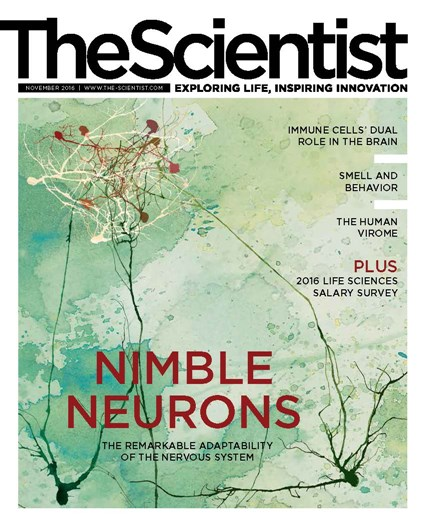 The Scientist November 2016 Cover