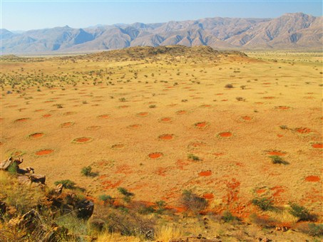 Fairy circles in a relatively wet environment in the Marienfluss Valley in Kaokoveld, Namibia. They appear to be holes in the grass.