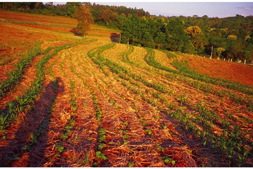 No-till agriculture without herbicides in southern Brazil. Cover crops left as mulch produce chemicals that inhibit weed growth.