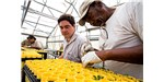 A botanist from The Nature Conservancy teaches an inmate to grow endangered prairie plants.