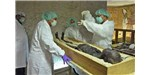 Researchers take a sample from the mummy of King Tut