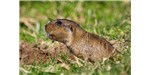 Researchers  discovered four new species of burrowing rodents called tuco-tucos this year in Bolivia.