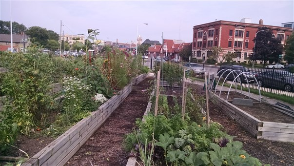 North Cass Community Garden in Midtown Detroit