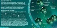 image: Exosome Basics