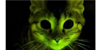 image: Fluorescent Cats Aid Research