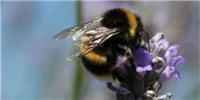 image: Pesticide Problems for Bees