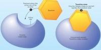 image: Designing Transition-State Inhibitors