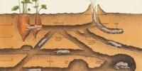 image: Digging the Underground Life