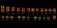 image: Preventing Genetic Identity Theft