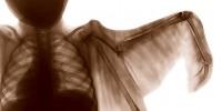 image: Anatomical Mashups