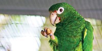 image: Polly Wanna Genome?