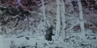 image: Suspect Sasquatch Sequencing