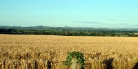 image: Opinion: Evolving CO2-Hungry Crops