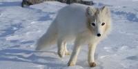 image: Arctic's Menacing Melt