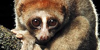 image: 2012's Noteworthy Species