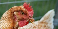 image: The End of Days for H5N1 Moratorium?