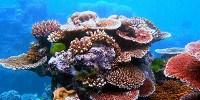 image: Deep Reef