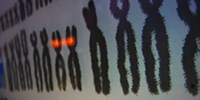 "image: ""Social"" Chromosome Discovered"