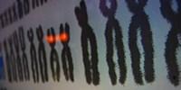 "image: ""Social"" Chromosome Discovered"
