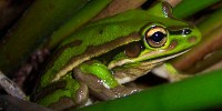 image: Opinion: Paradoxical Amphibians