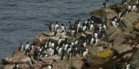 image: Oil Additive Harming Seabirds