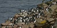 image: Oil Additive Harming Seabirds