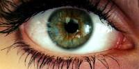 image: Robo-Eye to Enter US Market