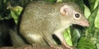 image: Placental Ancestor Found