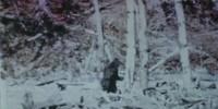image: Bigfoot DNA is Bunk