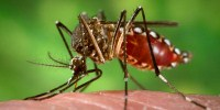 image: Some Mosquitoes Ignore DEET