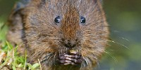 image: Bridges for UK Water Voles
