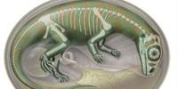 image: Dinosaur Embryo Graveyard