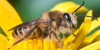image: A Political Battle Over Pesticides