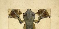 image: Flying Frog, 1855