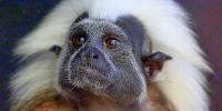 image: Harvard to Close Primate Center