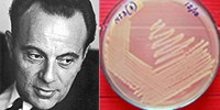 image: Nobel Prize Winner François Jacob Dies