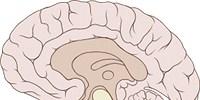 image: Building Complex Brains
