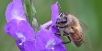 image: Europe to Ban Neonicotinoids