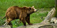 image: Birdwatcher Fights Off Bear