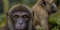 image: Oldest Fossil of Ape Discovered