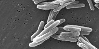 image: Vitamin C Slays TB Bacteria