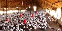 image: Drug Resistant Avian Flu