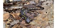 image: Salamander Evolution
