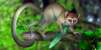image: Fossil Sheds Light on Early Primates