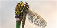 image: Pesticides Decimate Biodiversity