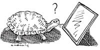 image: The Turtle That Never Was