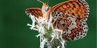 image: Transcriptomics for the Animal Kingdom