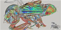 image: Image of the Day: Pretty Fly